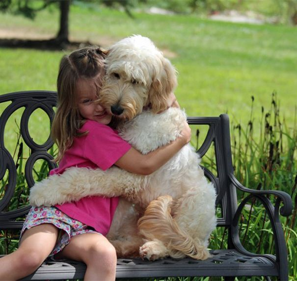 dogs hugging humans