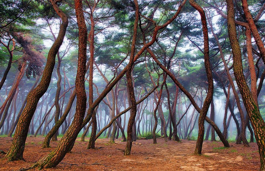 Amazing forests