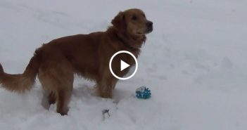 dog confused by squeaky toy