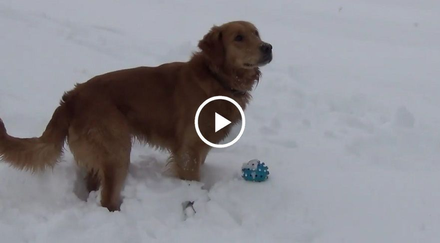 Dog Confused By Squeaky Toy Fropky Com